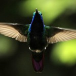 Study of Birds Could Lead to Better Drones