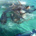 Drone Video of Shark Feeding Frenzy